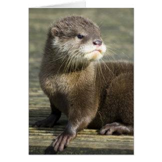 De leuke Otter van het Baby Briefkaarten 0