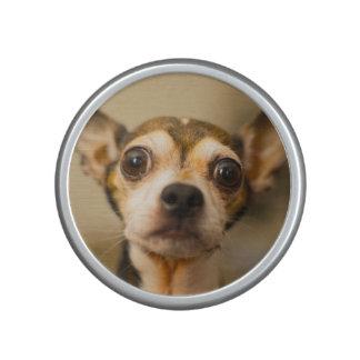 De leuke spreker van het Close-up van de Hond Speaker