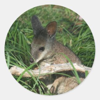 De leuke Wallaby van het Baby Ronde Sticker