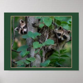 De leuke Wasberen van het Baby Poster