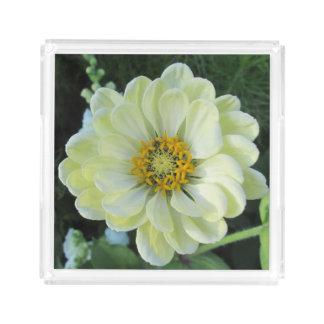 De Lichtgele Bloem van de dahlia Acryl Dienblad