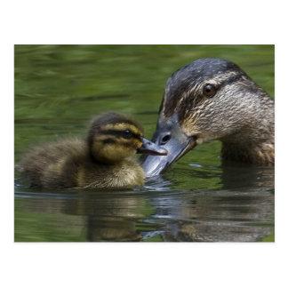De Liefde van een Moeder Briefkaart