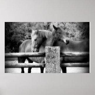 De Liefde van het paard! Het Koesteren van twee Pa Poster