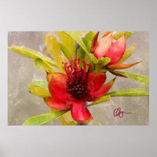 De Liefde van Protea Poster