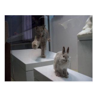 De looppas (a) dwars-hazen hyper van de Lynx Briefkaart