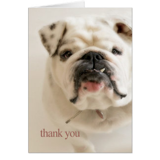 De loyale Witte Buldog dankt u Briefkaarten 0