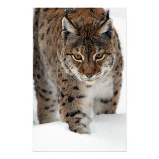 De Lynx van de sneeuw Persoonlijke Folder