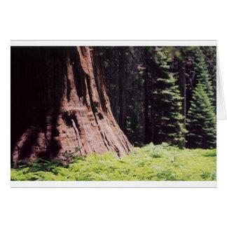 De machtige Sequoia Briefkaarten 0