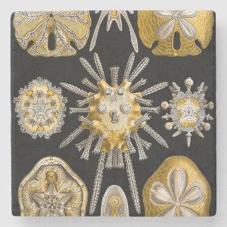 De macro Zeeëgels van de Schepselen ~ van het Zee Stenen Onderzetter
