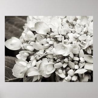 De Macro Zwart-witte Fotografie van de hydrangea Poster