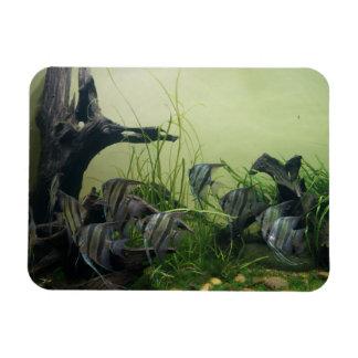 De Magneet van de Foto van de Zeeëngel van Orinoco