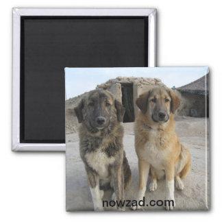 De Magneet van de Honden van Nowzad