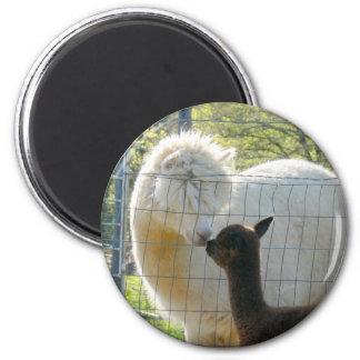 De Magneet van de Kus van de Alpaca van het baby