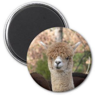 De Magneet van de Schoonheid van de alpaca