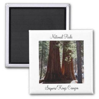 De Magneet van de sequoia/van de Canion van