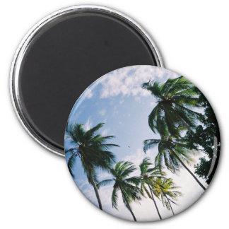 De Magneet van palmen