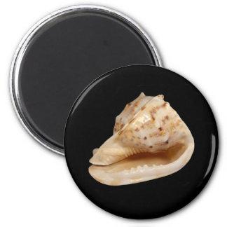 De Magneet van Shell van de kroonslak