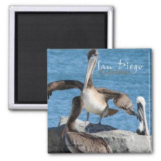 De Magneten van de Koelkast van de Pelikanen van S