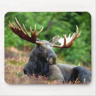 De majestueuze Weide van Amerikaanse elanden Muismat