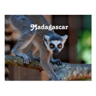 De Maki van Madagascar Briefkaart