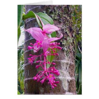 De Maleise Boom van de Orchidee Kaart