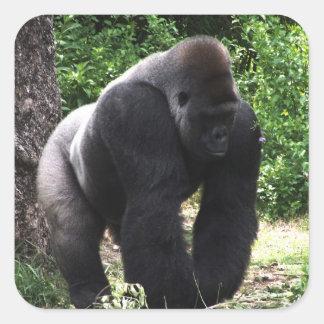 De Mannelijke Gorilla die van Silverback Vierkante Sticker