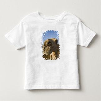 De markt van de kameel, Kaïro, Egypte T-shirt
