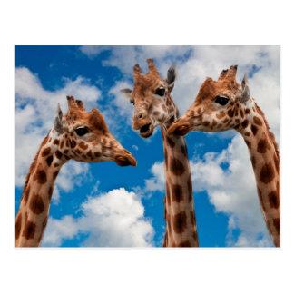 De Meisjes van de Roddel van de giraf Briefkaart