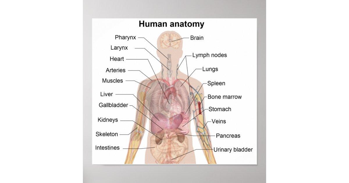 Ziemlich Menschliche Anatomie Torrent Ideen - Anatomie Ideen ...