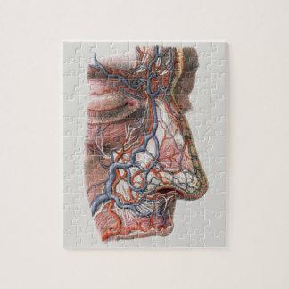 De Menselijke Anatomie van de vintage Wetenschap, Puzzel