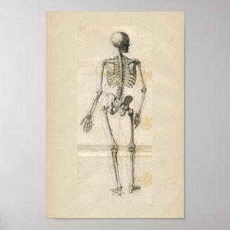 De menselijke Druk van de Anatomie van het Skelet Poster