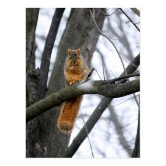 De mistige Eekhoorn van de Ochtend Briefkaart