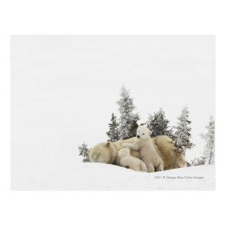 De Moeder van de Ijsbeer en Haar Welpen in Park Briefkaart