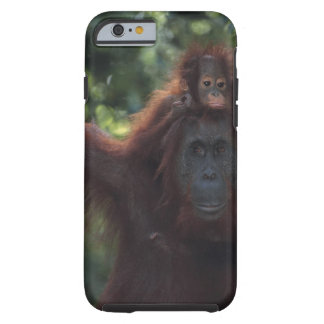 De Moeder van de orangoetan met Baby 5 Tough iPhone 6 Hoesje