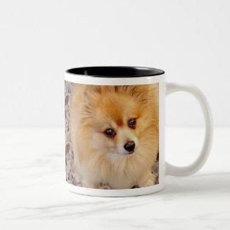De Mok van de Koffie van de Hond van Pomeranian