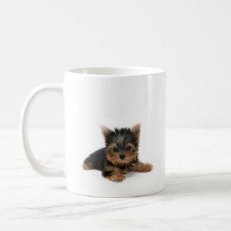 De Mok van het Puppy van Yorkshire Terrier