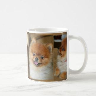 De Mok van Pomeranian