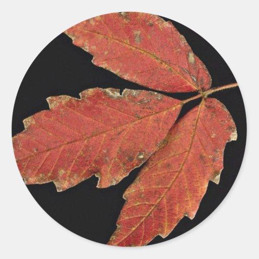 De mooie bladeren van het Gifsumak Ronde Stickers