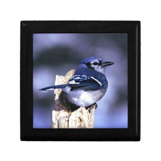 De mooie Blauwe vogel van de Vlaamse gaai Decoratiedoosje