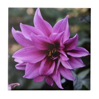 De mooie Bloem van de Dahlia Tegeltje