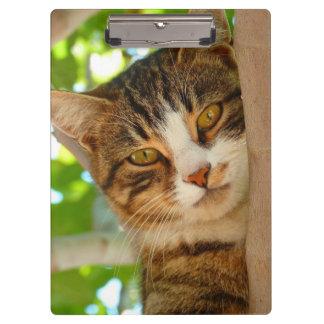 De mooie Boom van de Kat van het Kat Klembord