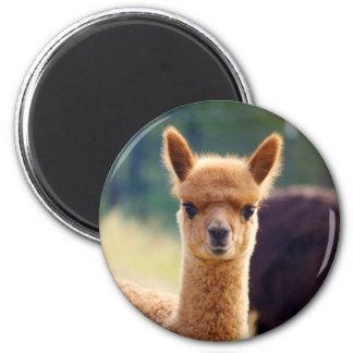 De mooie Magneten van de Alpaca
