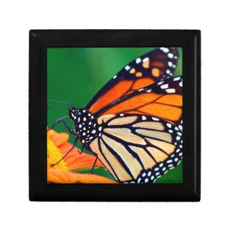 De mooie Vlinder van de Monarch Decoratiedoosje