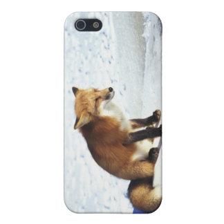 De mooie Vos van de Winter iPhone 5 Hoesje