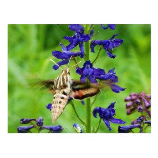 De mot van de kolibrie briefkaart