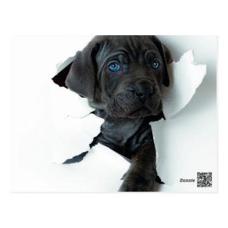 De Napolitaanse zwarte hond die van de Mastiff Briefkaart