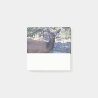 De Nota van de Post-it van Amerikaanse elanden Post-it® Notes