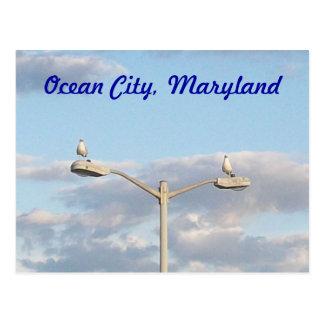 De oceaan Vogels van de Stad Briefkaart