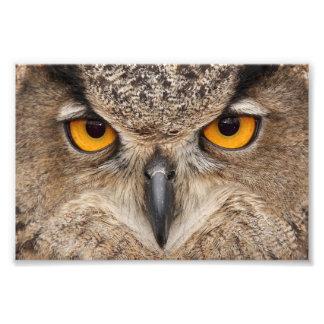 De ogen van de uil foto afdruk
