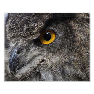 De Ogen van de Uil van Eagle Foto Kunst
